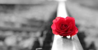 Rose on the railways.